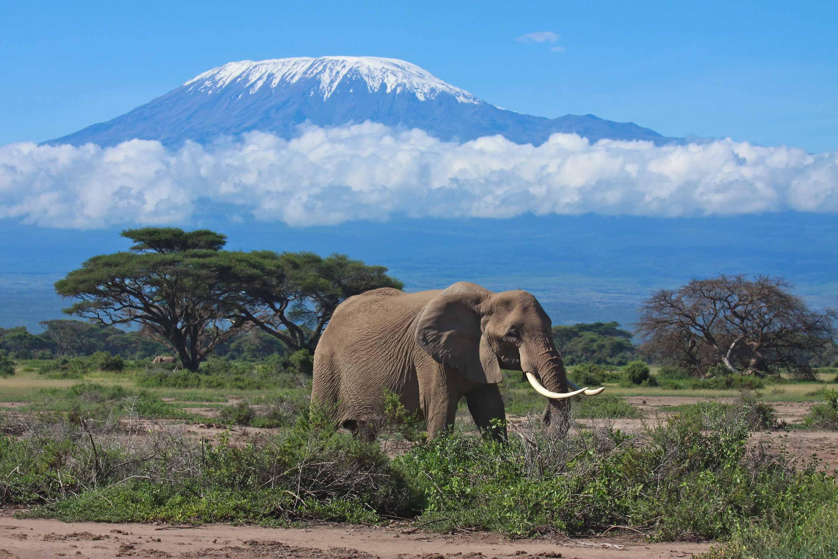 La Tanzanie: Une immersion en terre sauvage